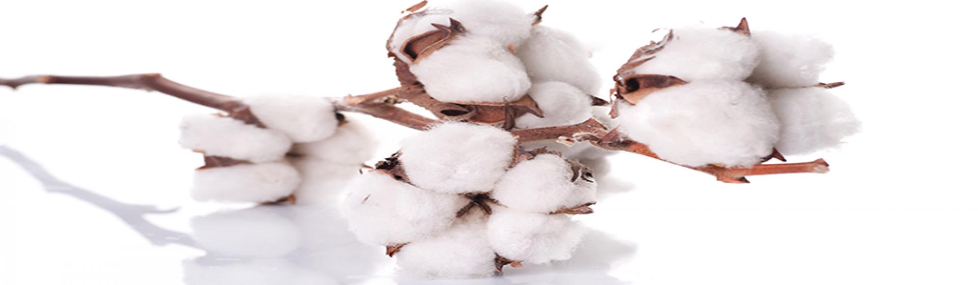 Ender Textile: Towels Bathrobes Home Textiles Turkey Manufacturer Producer Exporter